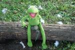 Prepping Kermit 5